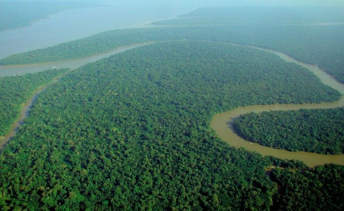 800px-Aerial_view_of_the_Amazon_Rainforest