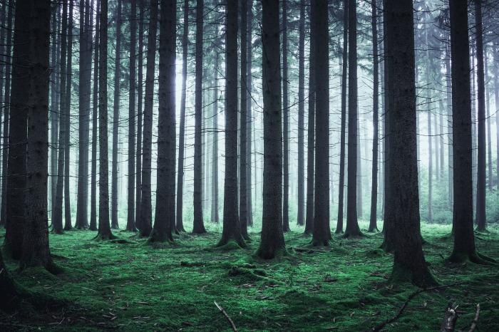 illustration_photo_pour_ms_Raynal_et_al_random_forest_parame